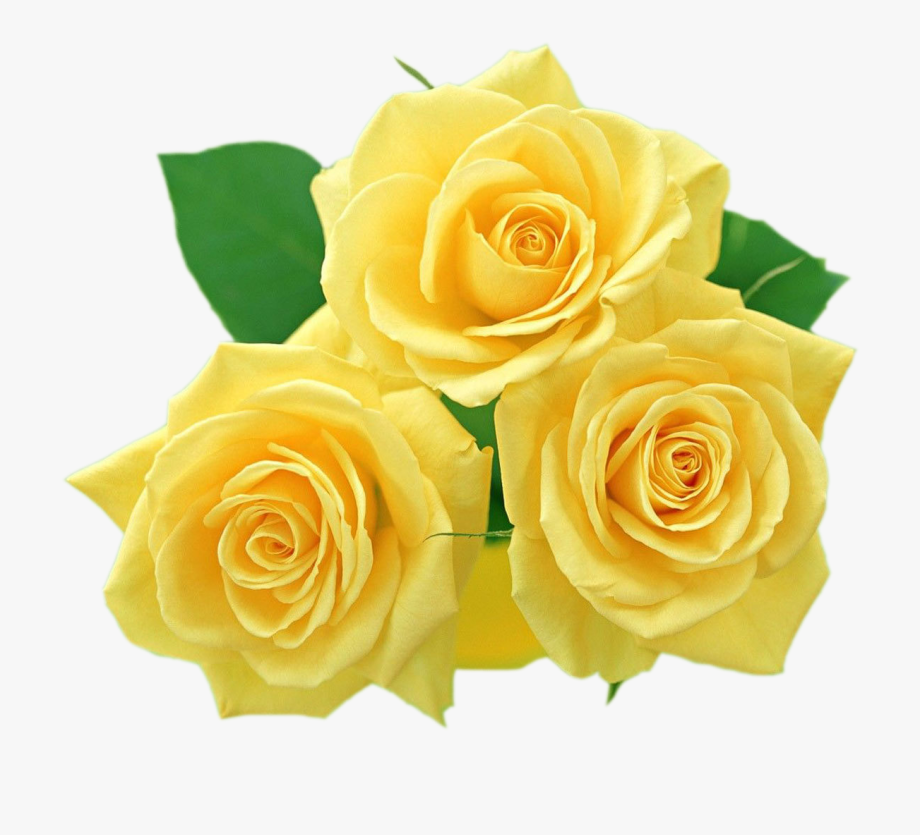 Yellow rose clipart png jpg stock Yellow Flowers, Textiles, Flower Clipart, Clip Art, - Rose ... jpg stock