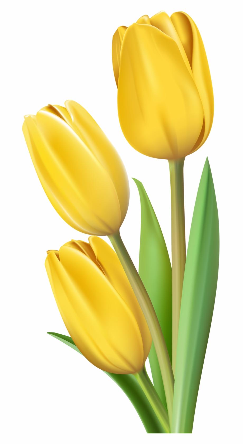 Yellow tulip clipart flower vector transparent stock Фото, Автор Soloveika На Яндекс - Yellow Tulip Flower Images ... vector transparent stock