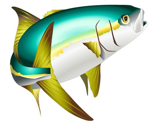 Yellowtail clipart picture royalty free stock Sport Fish Clipart | Rock art | Fish clipart, Fish ... picture royalty free stock