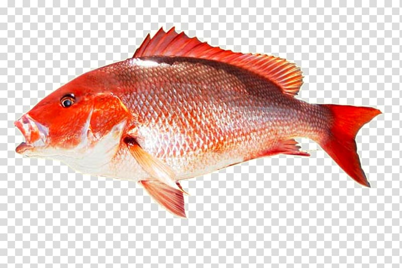 Yellowtail clipart freeuse stock Fish Northern red snapper Yellowtail amberjack Seafood King ... freeuse stock