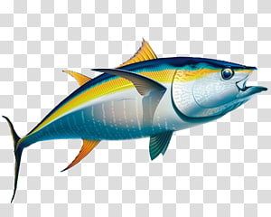 Yellowtail clipart graphic library stock Almaco jack Yellowtail amberjack Bar jack Greater amberjack ... graphic library stock
