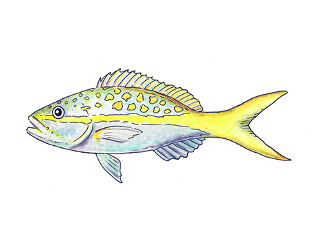 Yellowtail clipart clipart free library Yellow Tail Cliparts 23 - 450 X 360 - Making-The-Web.com clipart free library
