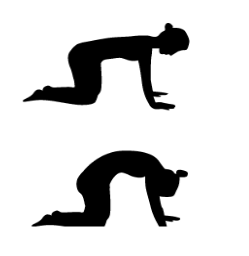 library of yoga cat pose stock png files clipart art 2019
