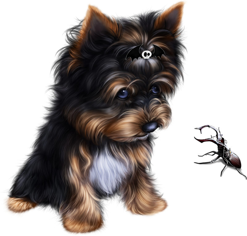 Yorkie clipart long hair free stock Yorkie Clipart Terrier Mix - Yorkshire Terrier , Transparent ... free stock