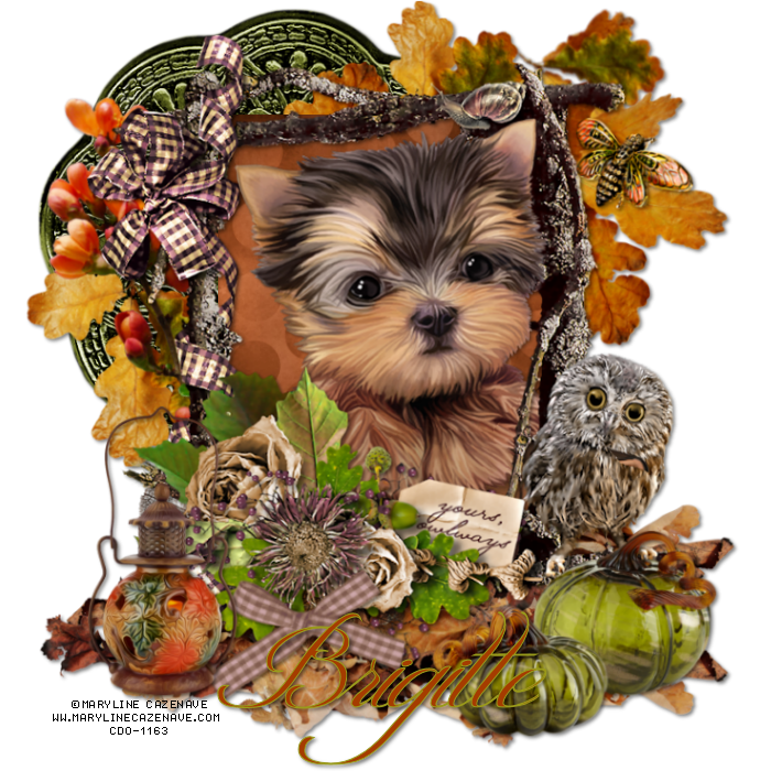 Yorkie thanksgiving clipart image transparent photo MarylineCazenave_Frame13-19_BW_zpspiqd1qjo.png | My Tubes ... image transparent