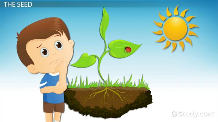 The word grow written in a flower clipart png library stock How Plants Grow: Lesson for Kids - Video & Lesson Transcript ... png library stock