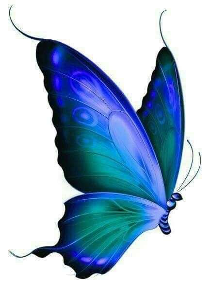 Young butterfly clipart