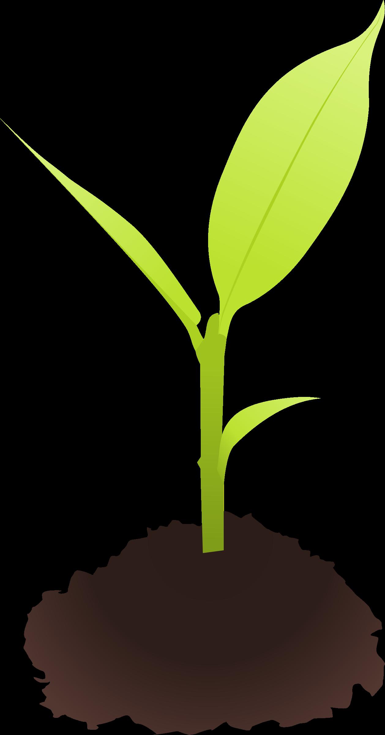Young tree clipart clip art Clipart - Small plant clip art