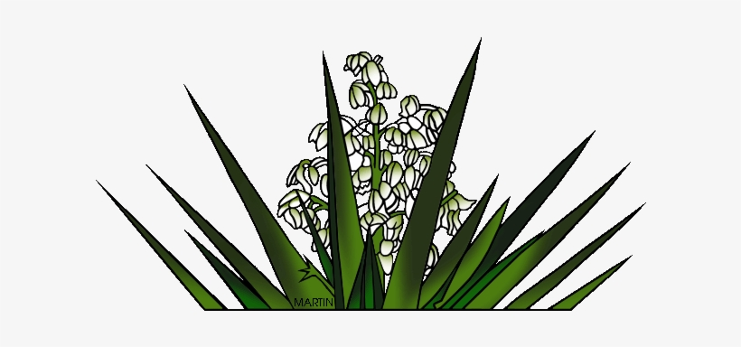 Yucca flower clipart free clipart freeuse library New Mexico State Flower Yucca Flower - New Mexico State ... clipart freeuse library
