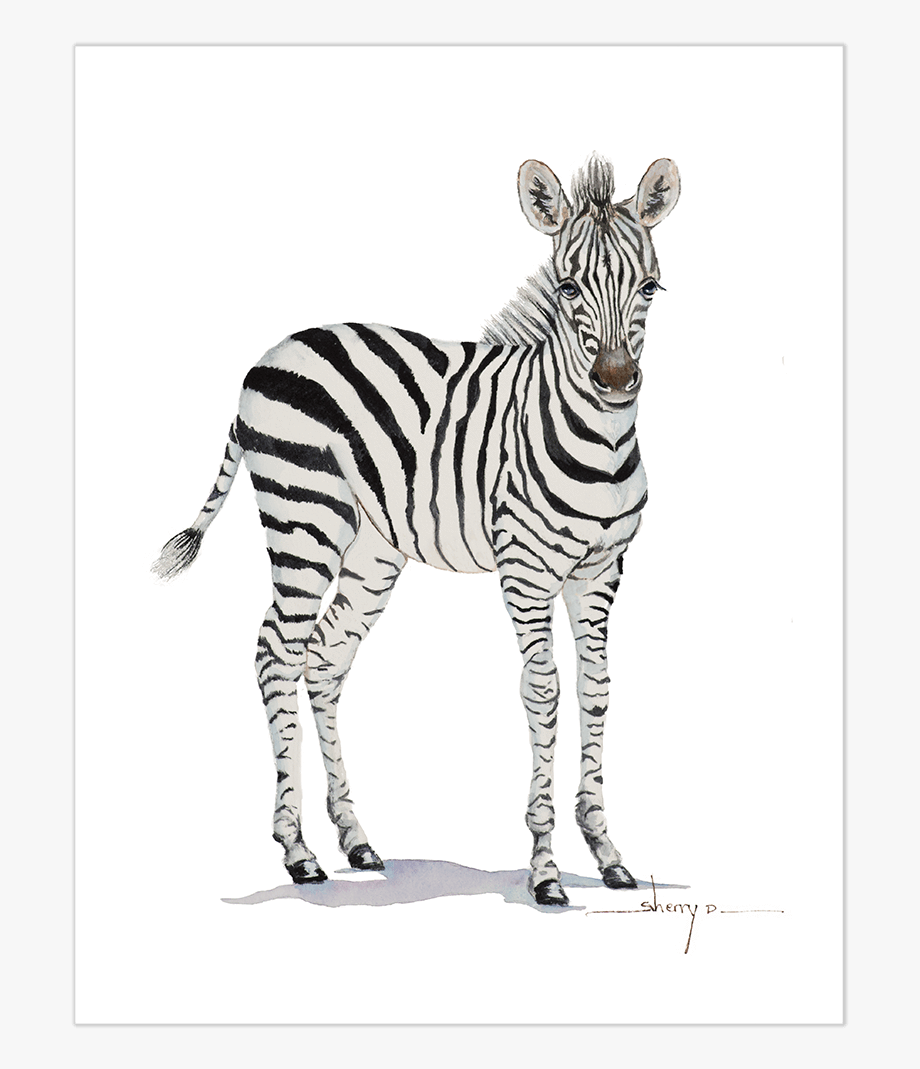 Zebra feet clipart picture free stock Baby Zebra Png - Transparent Baby Zebra Png, Cliparts ... picture free stock