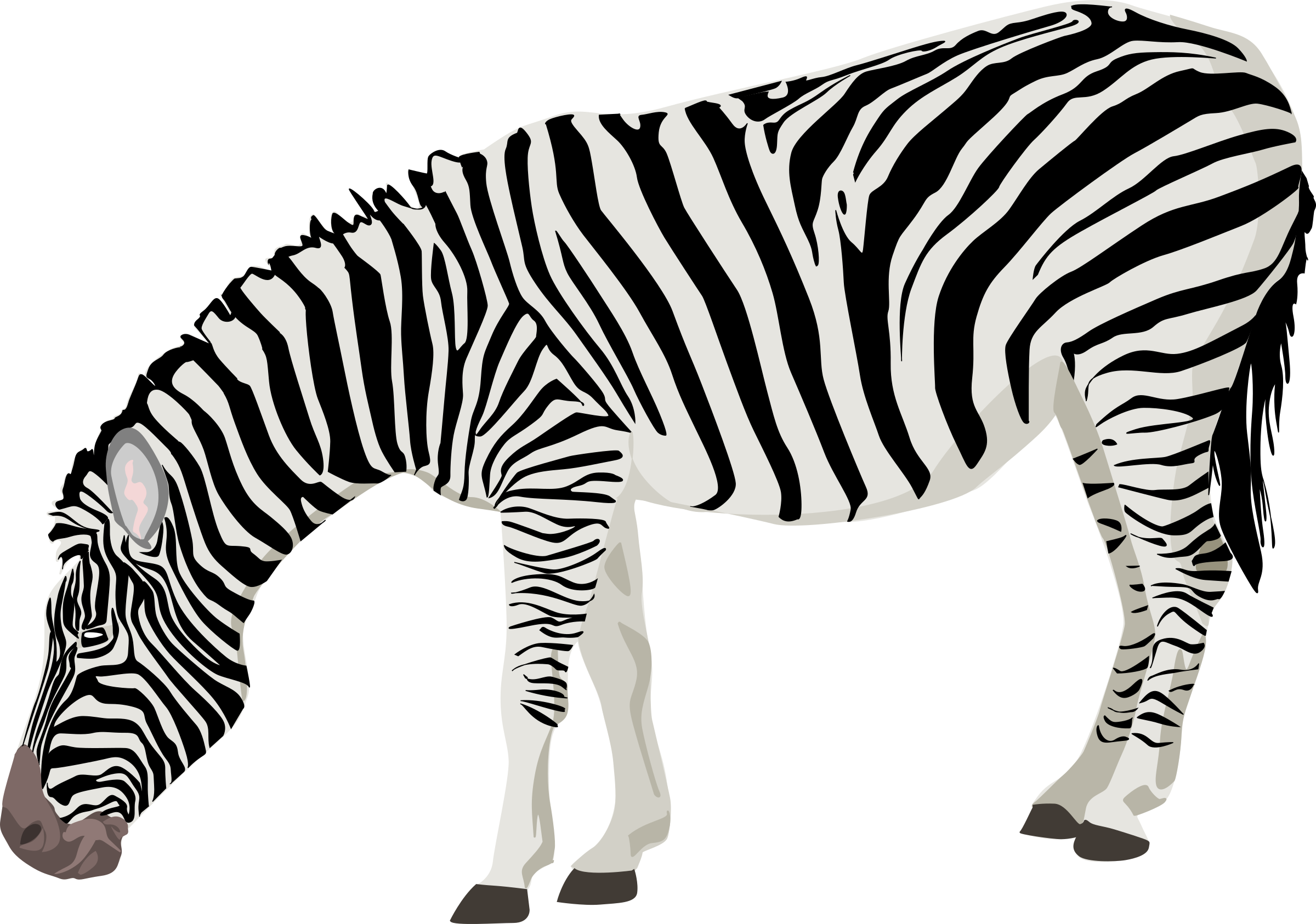 Zebra star clipart clip art library stock Zebra Icons PNG - Free PNG and Icons Downloads clip art library stock