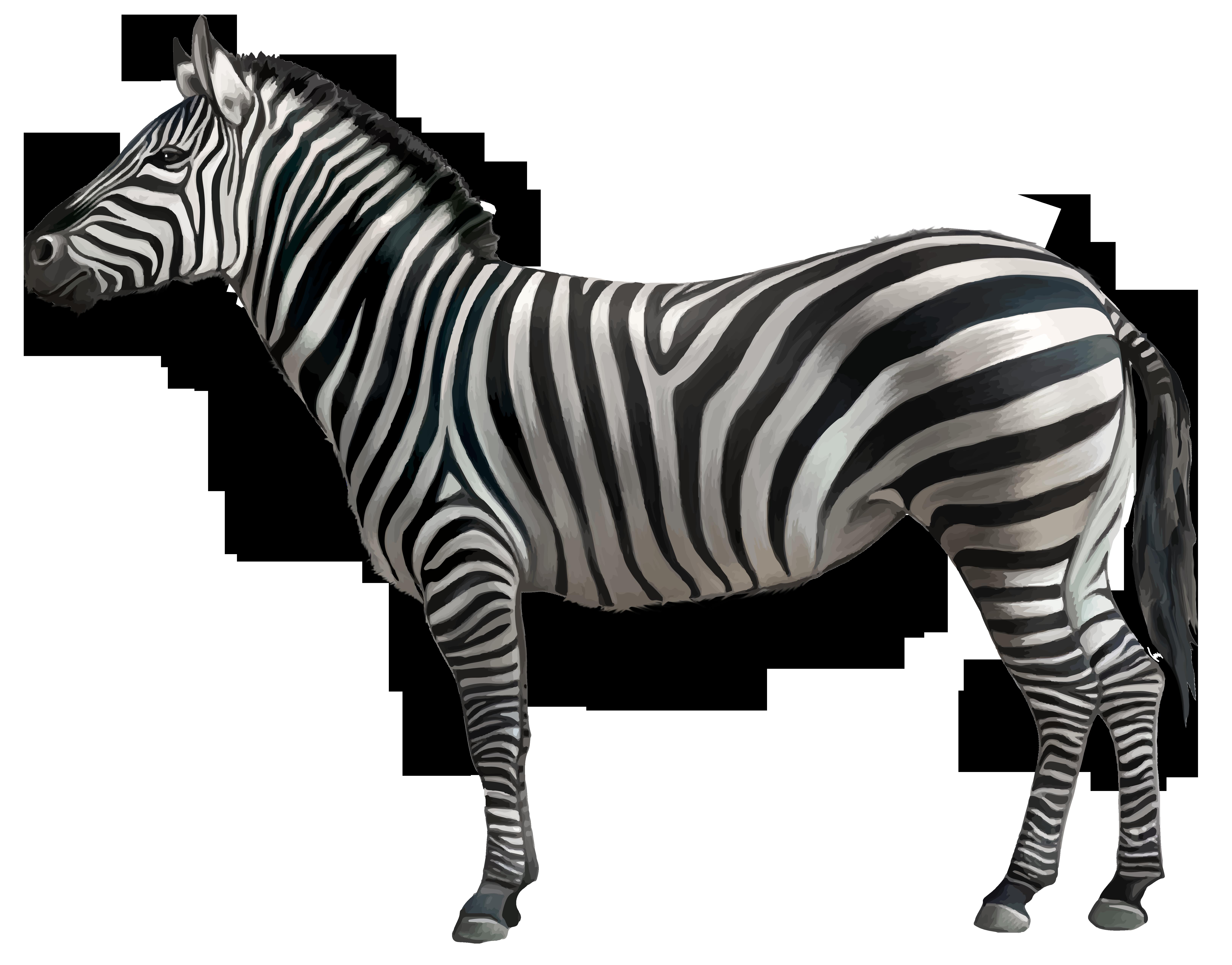 Zebra star clipart clip art transparent download Zebra PNG Clipart Image   Gallery Yopriceville - High-Quality ... clip art transparent download