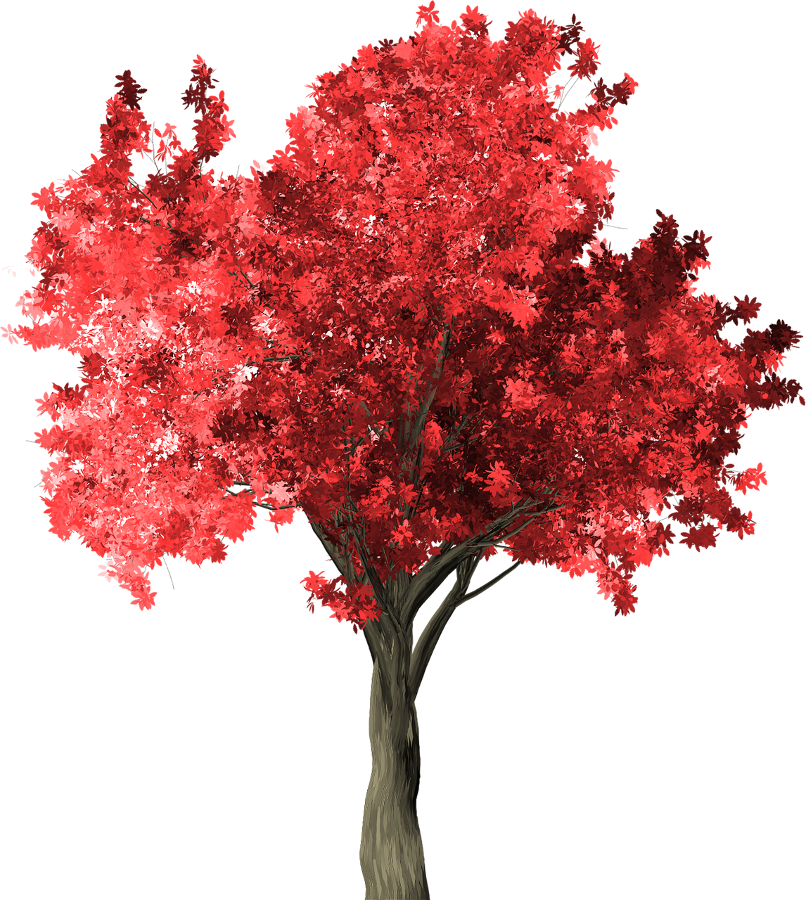 Zelkova serrata clipart clip download Zelkova Serrata Tree Red Zelkova PNG - Picpng clip download