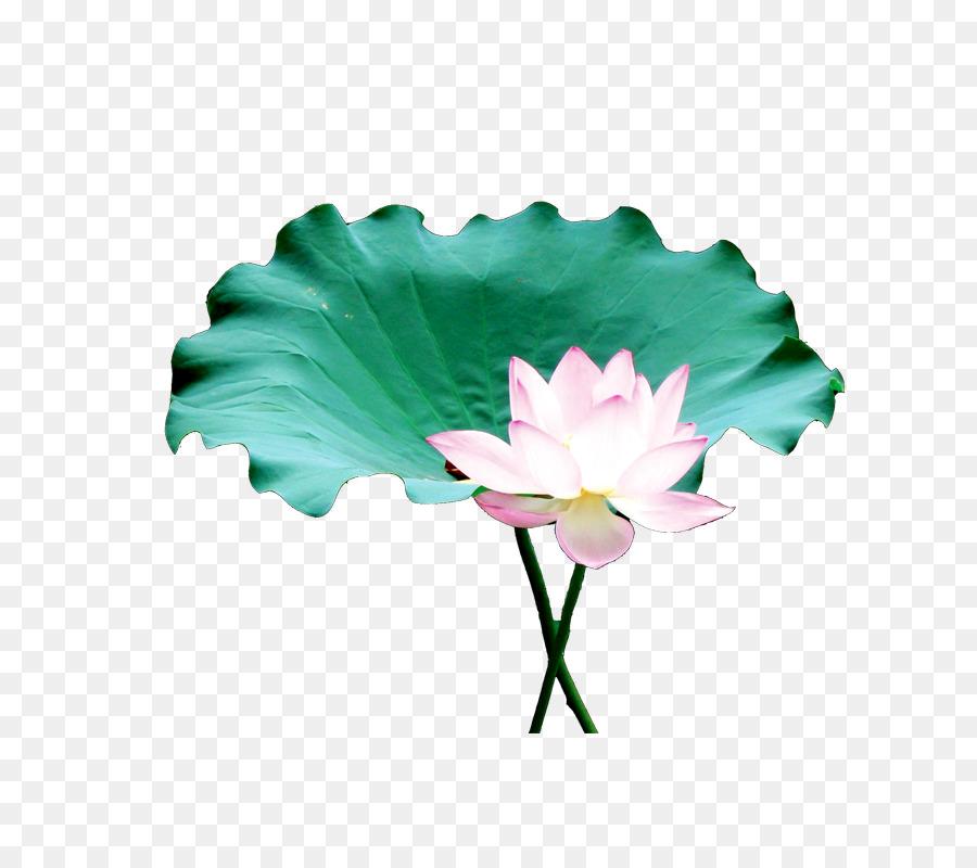 Zen flower clipart jpg free Flowers Clipart Background png download - 800*800 - Free ... jpg free