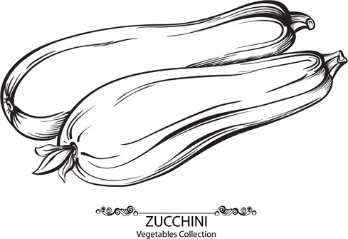 Zucchini clipart black and white image transparent library Zucchini free vector download (5 Free vector) for commercial use ... image transparent library